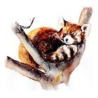 Red panda by AnnaShell