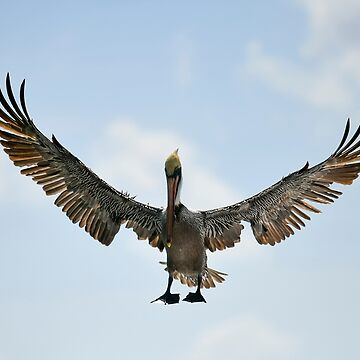 Pelican Wing Span by justinrusso