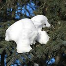 Polar Bear,In A Tree? by MaeBelle