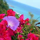 Bouganvillia, Taidong by Digby