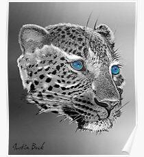 Leopard-Old-Blue-Eyes-Justin-Beck-Picture-2015098 Poster