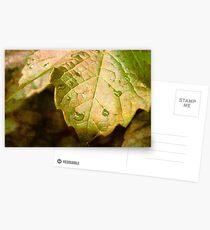 Refresh Postcards