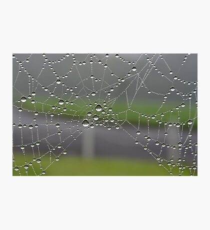 More Dewdrops . Photographic Print