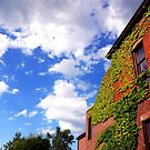 Growing Ivy by PJS15204