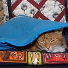 Angus Under a Blanket by Andrew Trevor-Jones