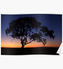 Gum Tree Silhouette Poster