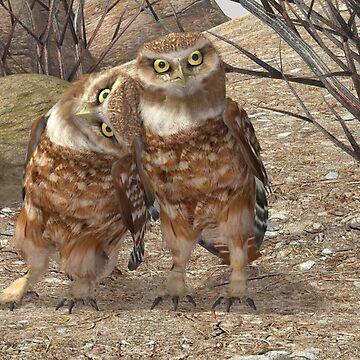 Burrowing Owls by empken