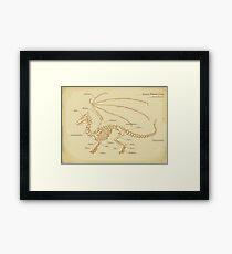 European Mountain Dragon Anatomy Framed Print