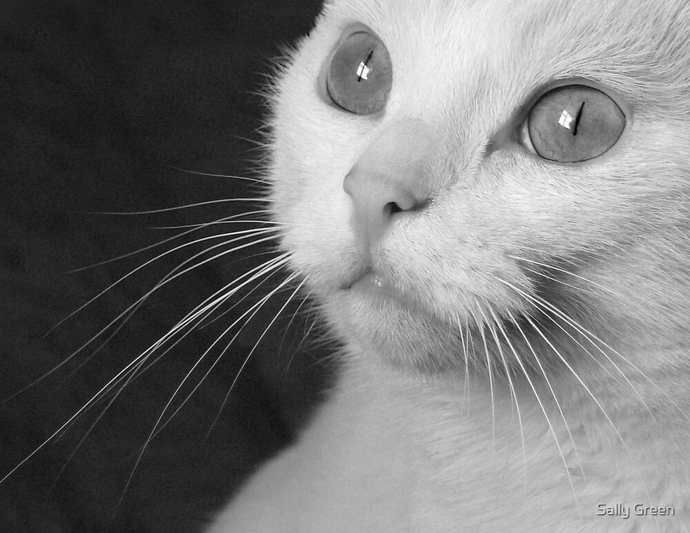 What Big Eyes You Have.... (Mono) by Sally Green