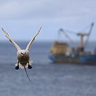Tropic Bird incoming! by Peter Doré