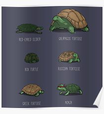 Know Your Turtles Poster