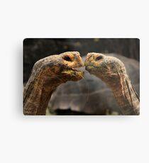 Tortoise Magic Metal Print