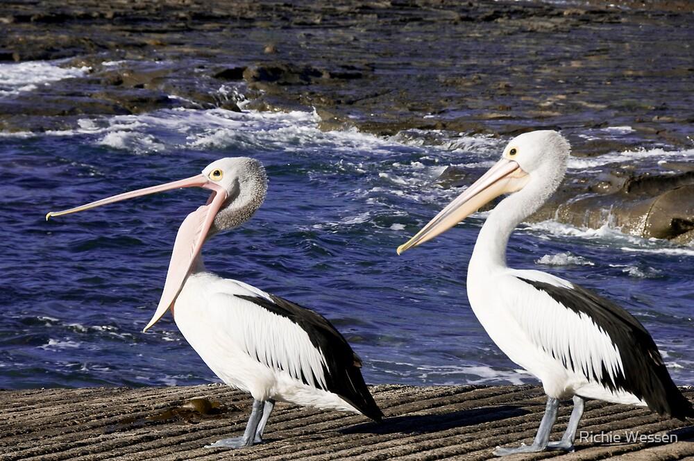 Pelicans by Richie Wessen