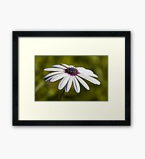 Nature - Up Close Framed Print