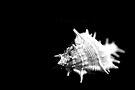 Sea spikes by Vikram Franklin
