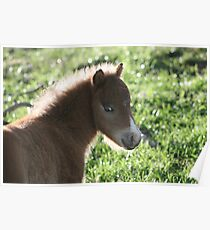 Harry Hershey Kisses Miniature Horse Poster