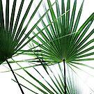 Palm Leaves 12 by Mareike Böhmer