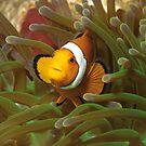 Anemonenfische | Hier wohne ICH! von Ute Niemann
