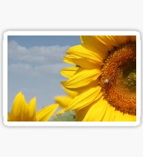 summer scene sunflowers and bee Sticker