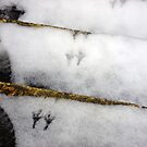 Footprints by DJMarchese
