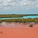 Mangroves, Roebuck Bay, Broome, Western Australia by Adrian Paul