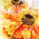 Helenium Splash by Ann Garrett