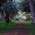 Trees by Christian  Zammit