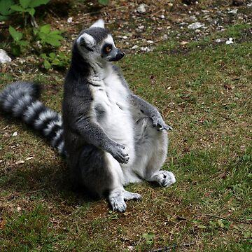 Love a Lemur  by shanecox704