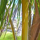 Malaki Beach by Bradley Old