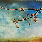 berries by Angel Warda