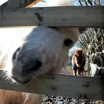 Winter Ponies by RedShedArt