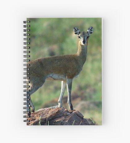 THE BALLERINA - *KLIPSPRINGER – Oreotragus oreotragus* Spiral Notebook