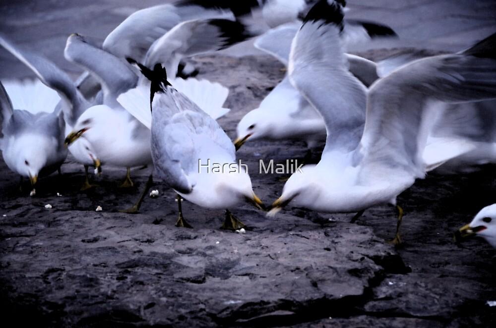 Feeding the Doves by Harsh  Malik