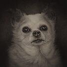 Teddy, Puppy Mill Survivor by Pam Humbargar