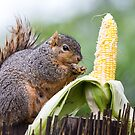 Squirrel Corn by Bo Insogna