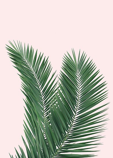 palm leaves tropical leaves pink background photographic prints by