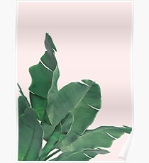 Banana leaves tropical leaf Poster