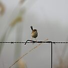 Fairy Wren on a Foggy Morning by Jenelle  Irvine