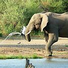 LAST SHOWER -  THE AFRICAN ELEPHANT – Loxodonta africana by Magriet Meintjes