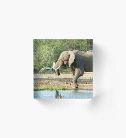 LAST SHOWER -  THE AFRICAN ELEPHANT – Loxodonta africana Acrylic Block