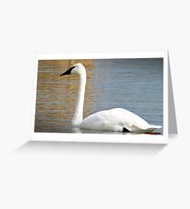 """"""" The Trumpeter Swan"""" Greeting Card"""