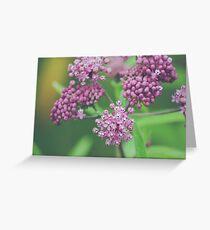 Milkweed Blooms Greeting Card