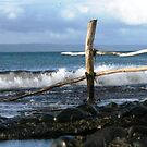 Fence at Sea by Dawn Ostendorf