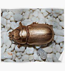 Golden bug Poster