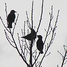 Three birds by brendalynn52