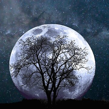 Visual Perception Moon and Tree Silhouette by Claireandrewss