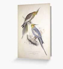 Illustrations of the family of Psittacidœ or parrots Edward Lear 1832 027 Greeting Card