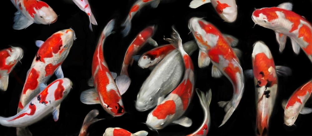 Koi Fish by Aaron Bolton