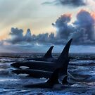 Orca Sunrise by Cliff Vestergaard