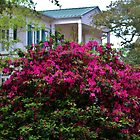 Beautiful Living In The South by Cynthia48